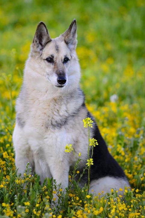 mascota canina sentada