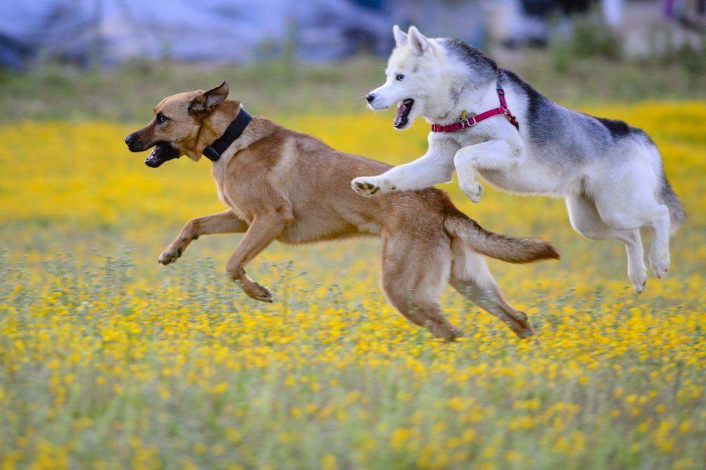 mascotas corriendo