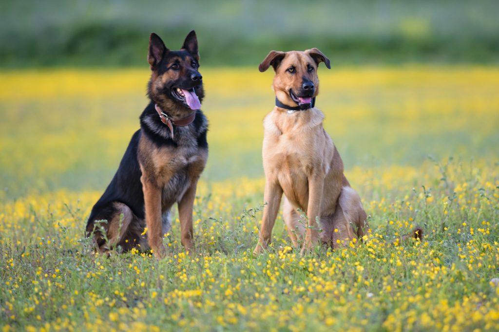 mascotas perros esperando